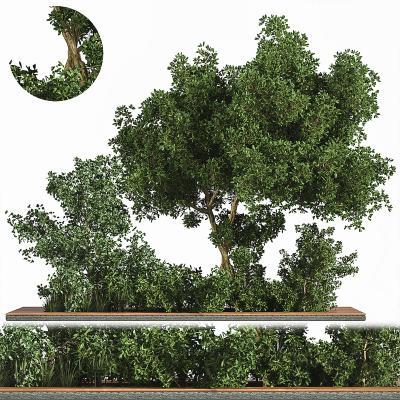 现代植物花卉 景观树