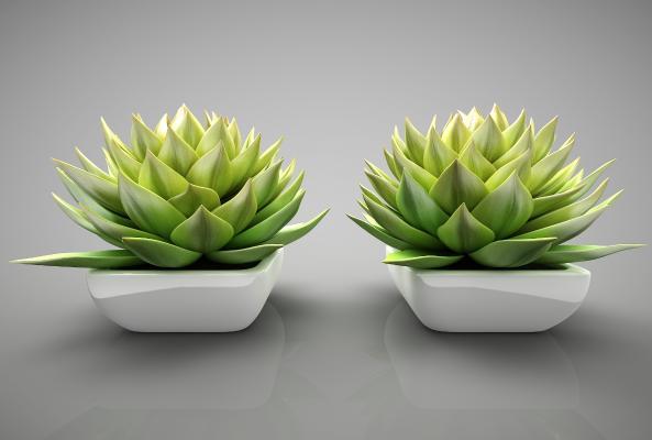 现代风植物