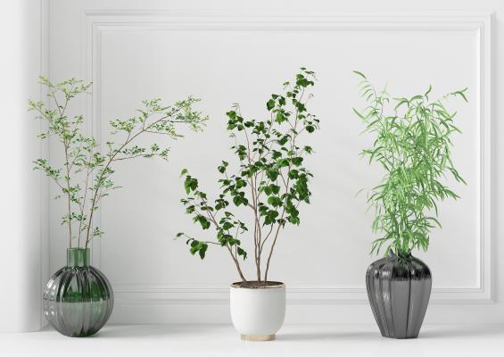 现代植物 现代绿植 时尚绿植 植物摆件 绿植摆件 现代盆栽