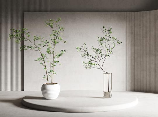 现代盆栽 绿植 植物