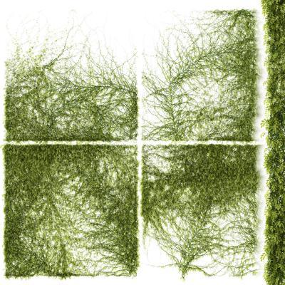 现代爬藤藤蔓爬山虎植物