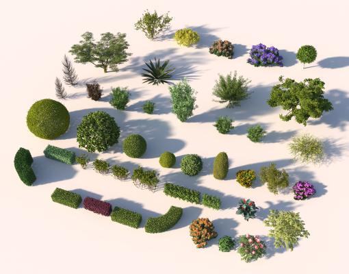 现代树木 灌木 绿篱