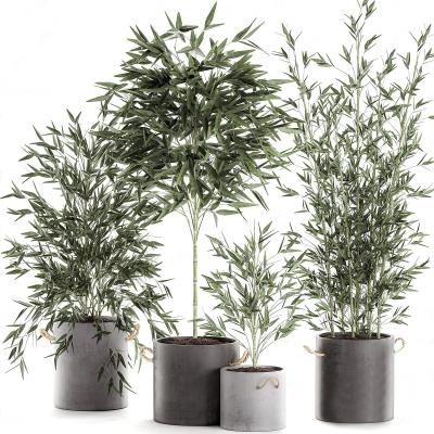 現代綠植盆栽 竹子盆栽