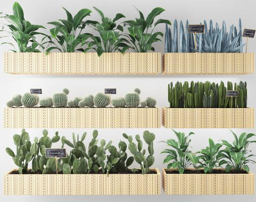 现代植物 盆栽 户外花草