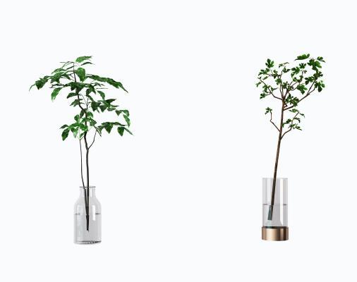 现代水生绿植 盆栽 盆景
