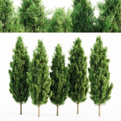 现代景观树 行道树