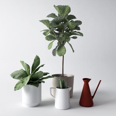 现代盆栽 花草 花卉