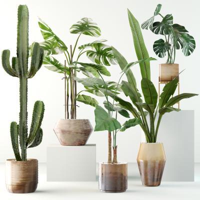 现代绿植盆栽 植物组合
