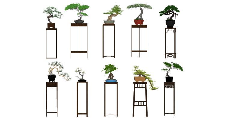 中式盆景 松树 花架