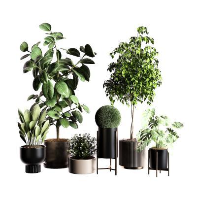 現代植物盆栽