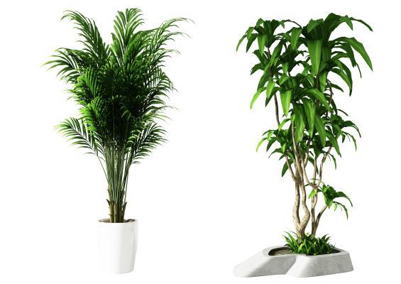 绿植,现代绿植,现代盆栽,现在装饰植物,客餐厅绿植,卧室绿植