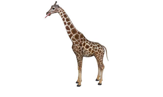现代动物长颈鹿