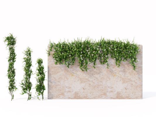 现代花坛花钵 藤蔓 爬藤