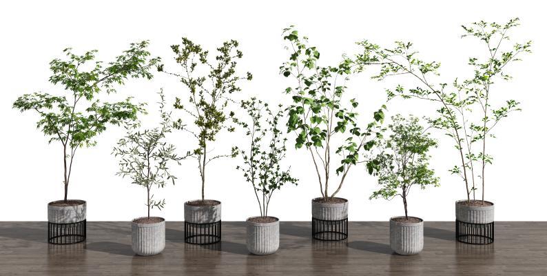 现代植物盆栽组合