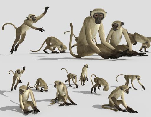 现代动物 金丝猴