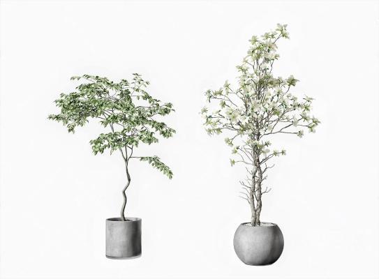 现代盆栽盆景 植物组合