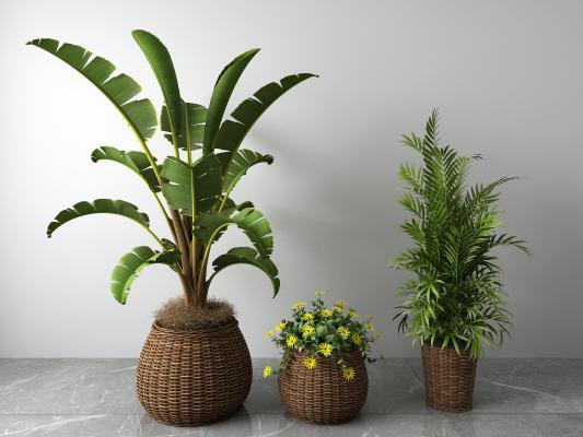 东南亚藤编盆栽