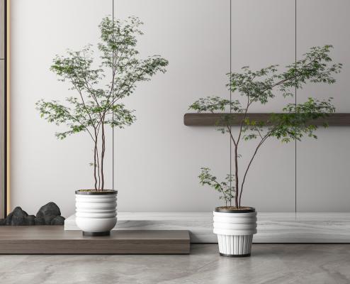 现代盆栽盆景
