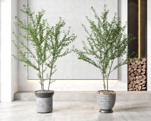 現代盆栽 盆景 植物組合