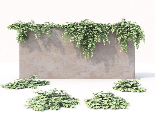 现代绿植墙 藤蔓 爬藤