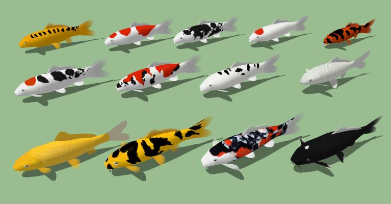 现代鲤鱼组合 锦鲤 鱼