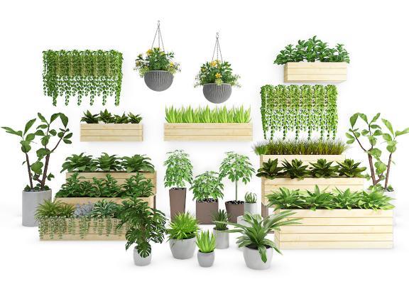 现代盆栽 植物