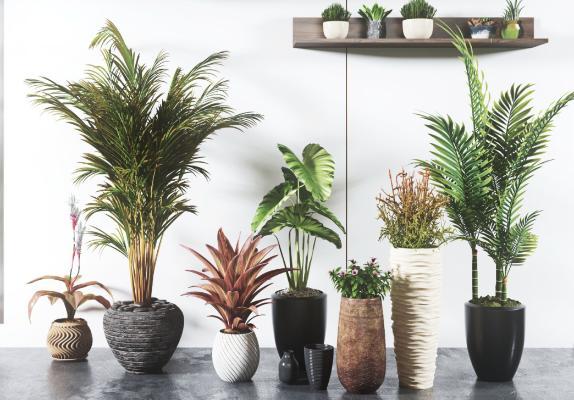 现代植物 盆景 绿植 盆栽 灌木