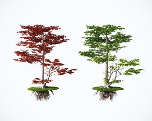 现代景观园林树 植物