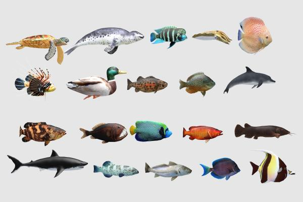 现代水生动物 鱼