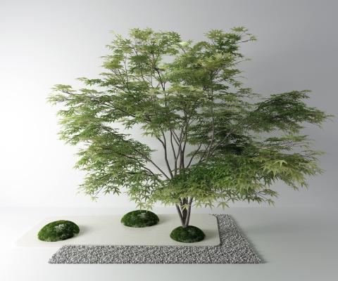 现代景观树 石子