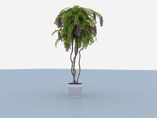 �F代盆栽 狐尾�m 紫花植物