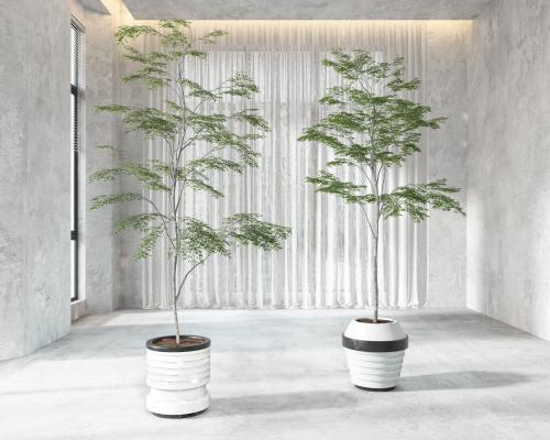 现代盆栽盆景植物组合