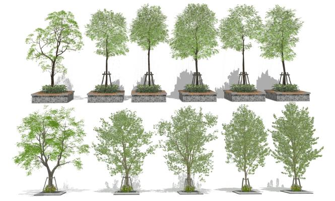 现代景观树 绿化树木 花草植物