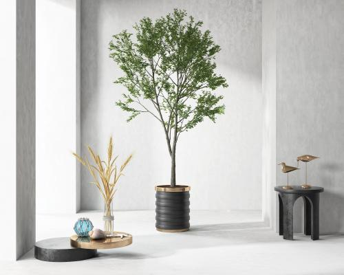 现代盆景盆栽