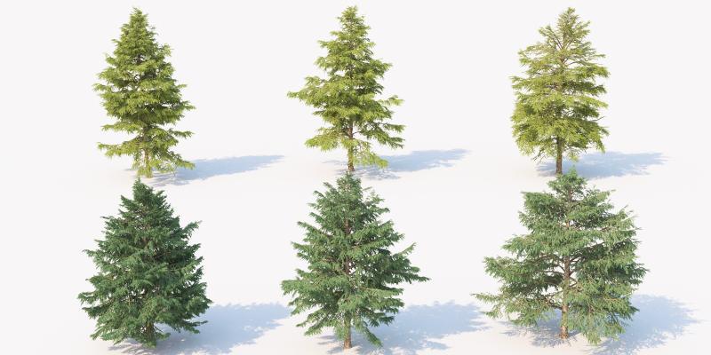 現代松樹 景觀樹 園林樹