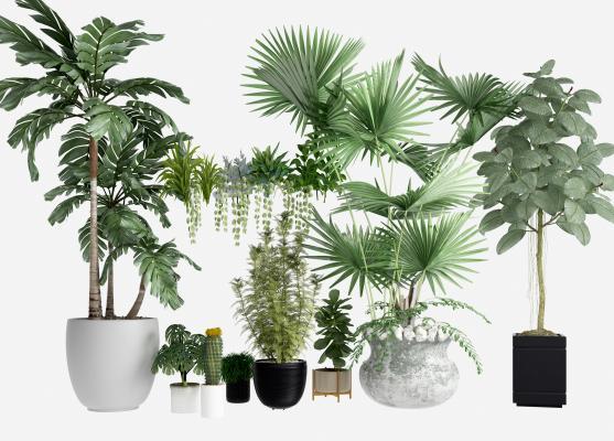 现代植物盆栽 盆景