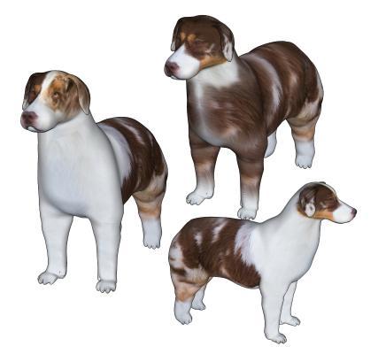 现代宠物狗