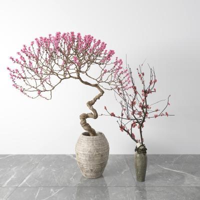 中式梅花盆栽