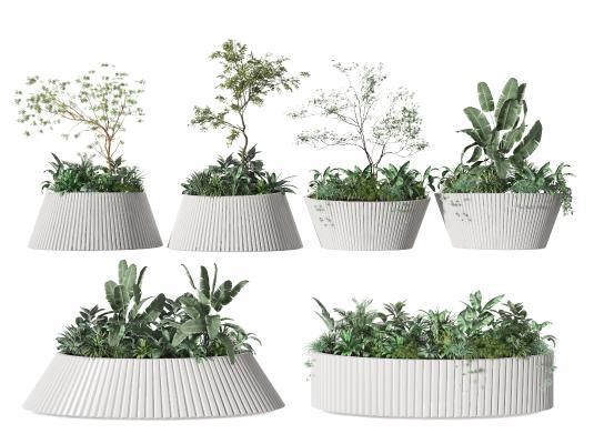 現代盆栽 植物 綠植