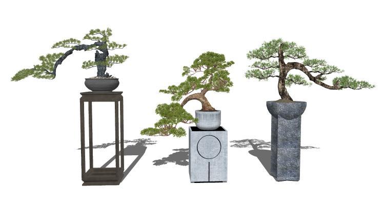 新中式松树盆景 迎客松 盆栽