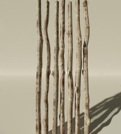 现代木头树干
