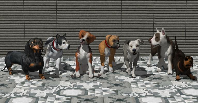 现代宠物狗 家养动物