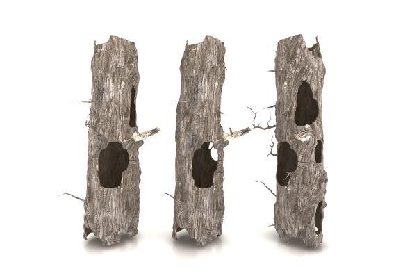 现代风格树木