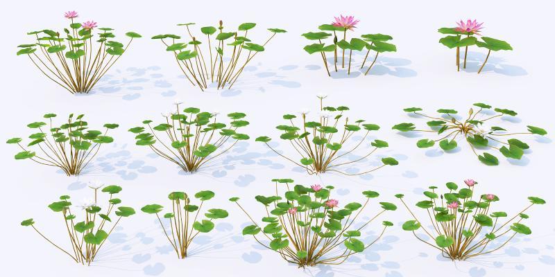 水生植物 荷花 荷叶