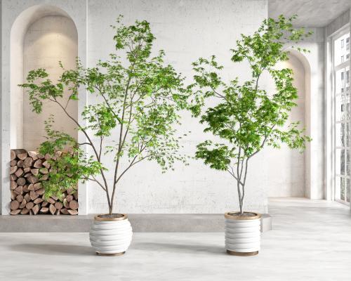现代盆栽 盆景 植物组合