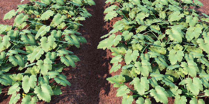 现代风格植物盆栽 菜地 蔬菜