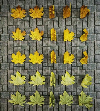 现代枫叶树叶落叶组合