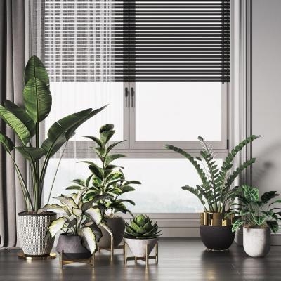 现代盆栽 盆景植物