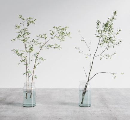 现代水生植物