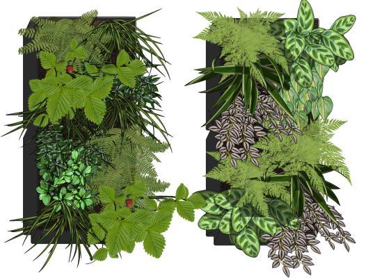 现代风格植物 绿植墙
